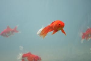 Ikan sebagai pembangkit ekonomi kreatif.